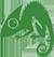 Chameleon Web Services Logo 50