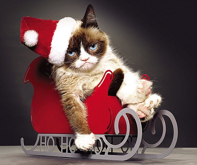 grumpy cat internet star