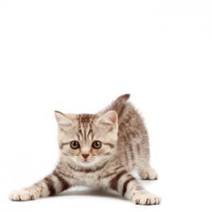 kitten-pounce