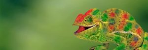 Chameleon Web Services